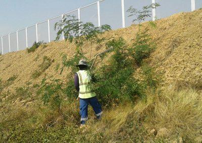 Airport Landscape maintenance